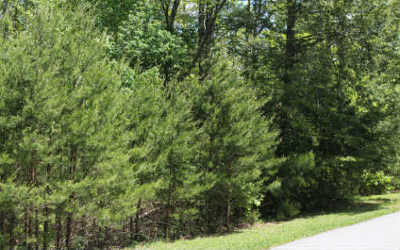 Young Harris Residential Lots & Land For Sale: Lt 96 Asheland Cove