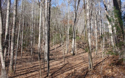Fannin County Residential Lots & Land For Sale: L446 Pony Ghost Trails
