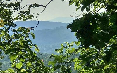 Ellijay Residential Lots & Land For Sale: 19.7a Tabor Rd