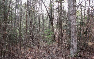 Residential Lots & Land For Sale: Lot 49 Chapel Hill