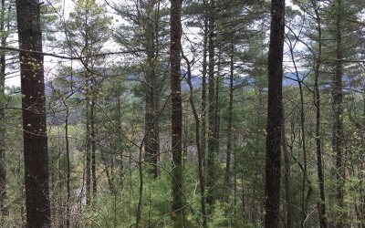 Residential Lots & Land For Sale: 52/53 Hidden Lake