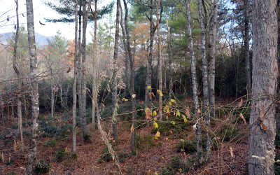 Hayesville Residential Lots & Land For Sale: #22 Big Pine Drive