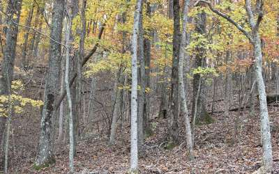 Ellijay Residential Lots & Land For Sale: L107 Skyview Drive