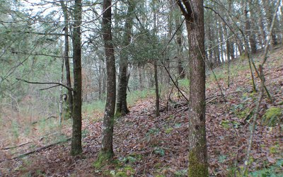 Mineral Bluff Residential Lots & Land For Sale: 4.9ac Cutcane Road