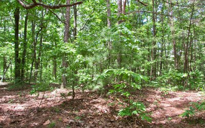 Ellijay Residential Lots & Land For Sale: Wildwood Trail