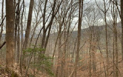 Hiawassee Residential Lots & Land For Sale: E-2 White Oak Forest