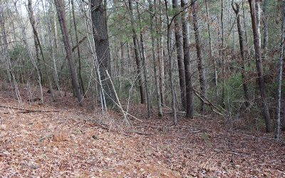 Ellijay Residential Lots & Land For Sale: Tonto Drive Lot 529