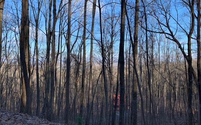 Fannin County Residential Lots & Land For Sale: Lt 88 Enchanting Forest