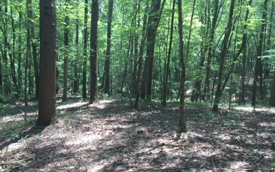 Ellijay Residential Lots & Land For Sale: # 500 Cohutta Court