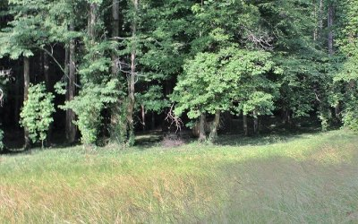 Ellijay Residential Lots & Land For Sale: Mulberry Trail