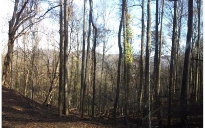 Ellijay Residential Lots & Land For Sale: 311 Walnut Mountain