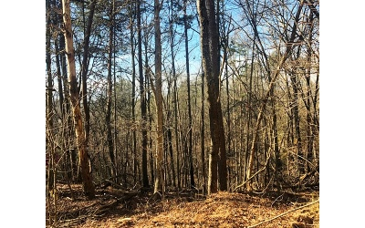 Ellijay Residential Lots & Land For Sale: 479 Riverview Drive