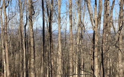 Residential Lots & Land For Sale: 983 Raccoon Ridge Rd