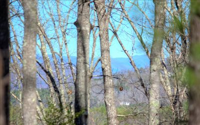 Blairsville Residential Lots & Land For Sale: Lot 2 Trail Tree Drive