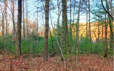 Blairsville Residential Lots & Land For Sale: Lt1&2 Trail Tree Drive