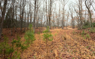 Residential Lots & Land For Sale: Lt 2 Meadows Of Ivy Log
