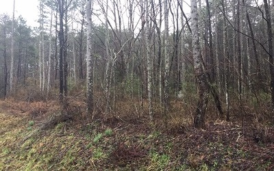 McCaysville Residential Lots & Land For Sale: Lt 16 Mountain View Ln