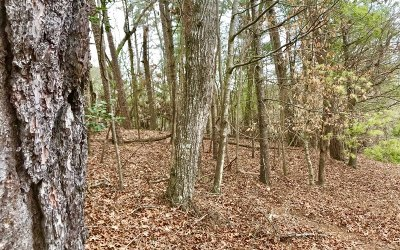 Ellijay Residential Lots & Land For Sale: Lt304 Camber Court