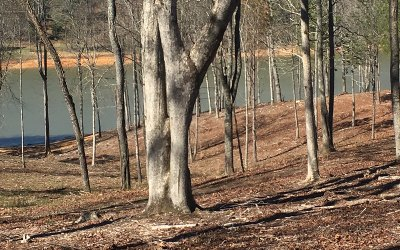 Blairsville Residential Lots & Land For Sale: Lt 14 Viewpoint Lane