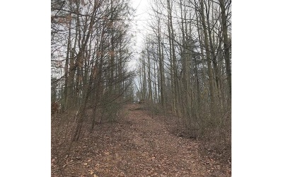 Ellijay Residential Lots & Land For Sale: Bryant Creek Road