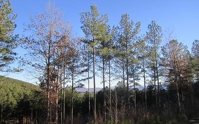 Residential Lots & Land For Sale: Lt 60 Ridge Peak View