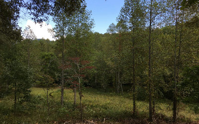 Blairsville Residential Lots & Land For Sale: Lot 4 Hood Acres