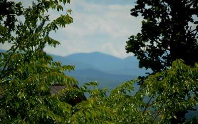 Mineral Bluff Residential Lots & Land For Sale: 19+ac Humphrey Mill