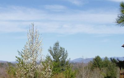 Brasstown Residential Lots & Land For Sale: Lot 4 Trillium Heights Tr