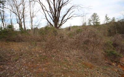 Residential Lots & Land For Sale: Black Walnut Lot 61