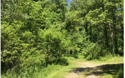 Hayesville Residential Lots & Land For Sale: Avery Scroggs Rd