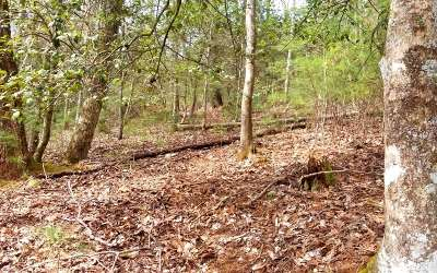 Suches Residential Lots & Land For Sale: Lot 4 Black Bear Mountain