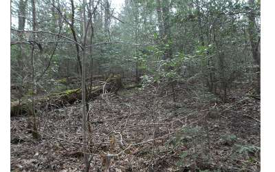 Blue Ridge Residential Lots & Land For Sale: Lt92 Power Dam Road