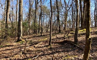 Jasper Residential Lots & Land For Sale: 3713+ Bent Tree