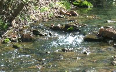 Jasper Residential Lots & Land For Sale: 1108 Oglethorpe Mountain
