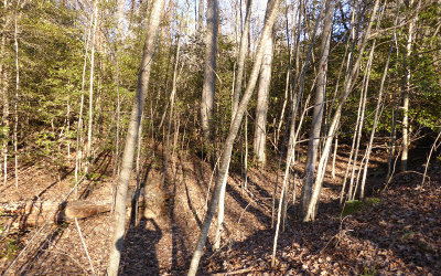Hayesville Residential Lots & Land For Sale: Lt 73 Fires Creek Cove