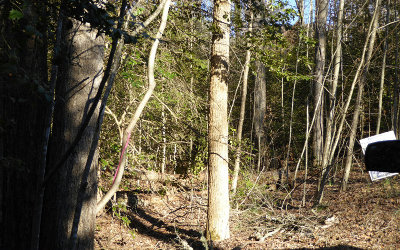 Hayesville Residential Lots & Land For Sale: Lots Fires Creek Cove