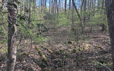Hayesville Residential Lots & Land For Sale: 9 Rhodemont Trail