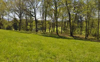 Hayesville Residential Lots & Land For Sale: Lot 5 Chatuge Shores Cir