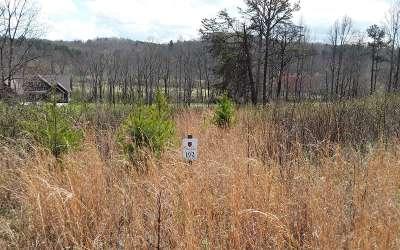 Blairsville Residential Lots & Land For Sale: Lt192 Owen Glen