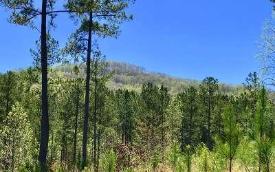 Blairsville Residential Lots & Land For Sale: Lt311 Thirteen Hundred