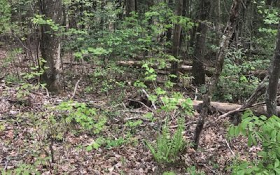 Hayesville Residential Lots & Land For Sale: Matheson Cove
