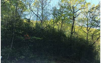 Hiawassee Residential Lots & Land For Sale: Lt 54 Mossy Cove/Kanuga