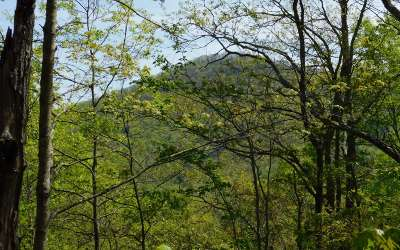 Brasstown Residential Lots & Land For Sale: Lt 24 Panther Trace