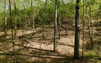 Brasstown Residential Lots & Land For Sale: Lt 14 Deer Trace