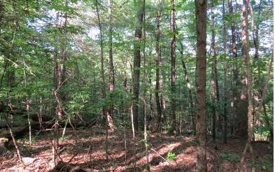 Ellijay Residential Lots & Land For Sale: 58, 59 Black Hawk Holler Tr