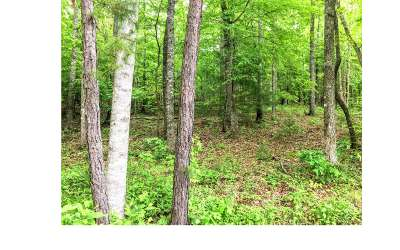 Murphy NC Residential Lots & Land For Sale: $24,800