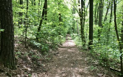 Mineral Bluff Residential Lots & Land For Sale: 10 Ac Whippoorwill Walk