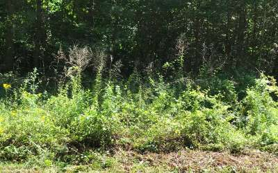 Ellijay Residential Lots & Land For Sale: Lt120 Ridgeview Tr