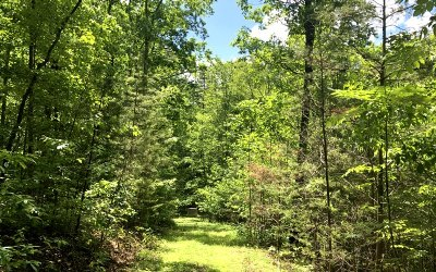 Mineral Bluff Residential Lots & Land For Sale: # 14 Bear Tracks