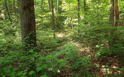 Murphy Residential Lots & Land For Sale: Tanglewood Dr